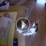 cachorro-ajuda-mãe-trocar-fralda-do-bebê