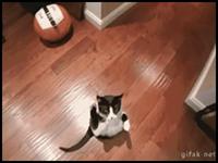 gato-decolar