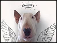 3609655094-artista-brasileiro-fotografa-seu-caozinho-interagindo-com-seus-desenhos-1062492117