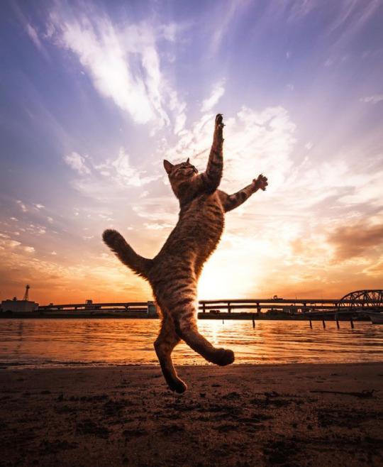 fotos-de-gatos-tiradas-no-momento-certo-2