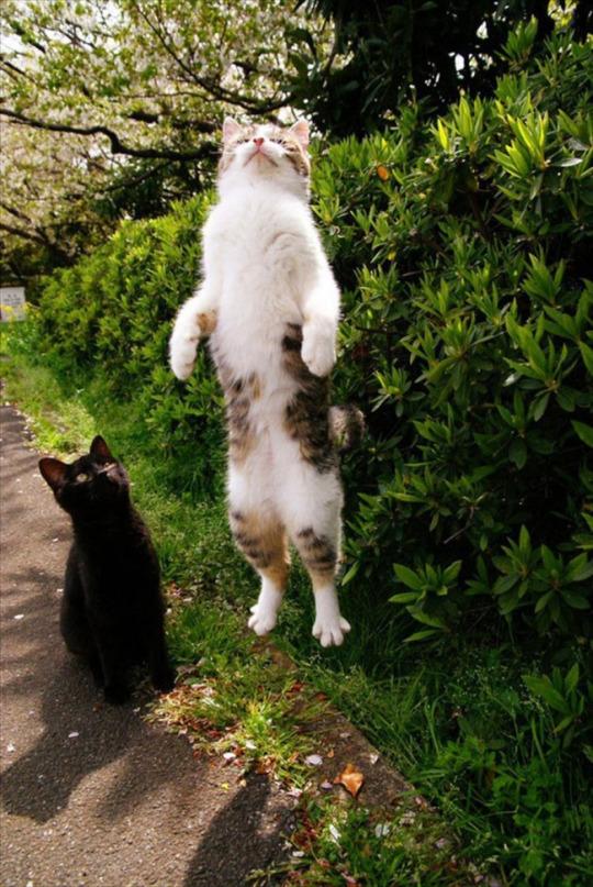 fotos-de-gatos-tiradas-no-momento-certo-5