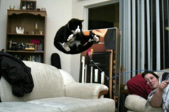 fotos-de-gatos-tiradas-no-momento-certo-7