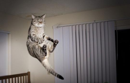 fotos-de-gatos-tiradas-no-momento-certo-8