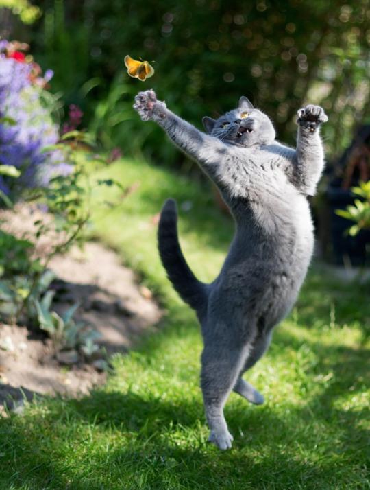 fotos-de-gatos-tiradas-no-momento-certo-9