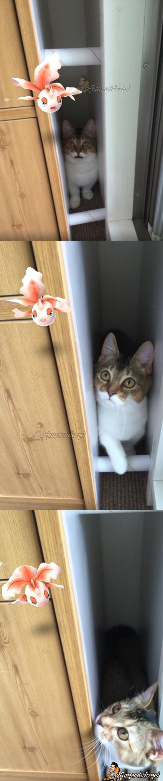 os-gatos-podem-ver-pokemons
